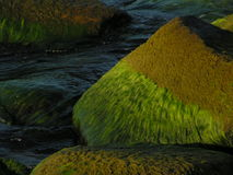 Stone in the sea. Stone covered with seaweed Royalty Free Stock Images