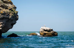 A stone in the sea. The cliff with seagulls Stock Image