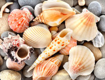 Stone and sea shells Royalty Free Stock Photography