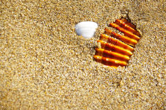 Stone and shell on the sand Stock Photography