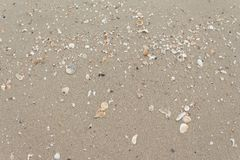 Stone,Shells in the sand on the beach in the summer stock photo