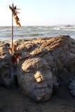 Stone Shiva face on Vagator beach of Goa Stock Photos