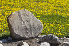 Stone sign. Without writing, in a field of dandelions Royalty Free Stock Photo
