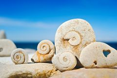 Stone spirals. Sea pebble with the hardened spirals on a beach at midday Stock Photography