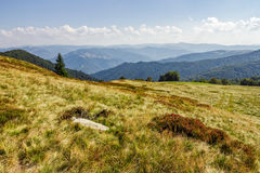 Stone and spruce tree on a grassy meadow of the mountain ridge Stock Photos