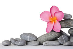 Stone Stack and Frangipani Flower Stock Images