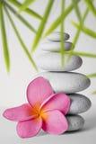 Stone Stack and Frangipani Flower Royalty Free Stock Photo