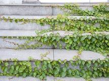 Stone stair Stock Photos