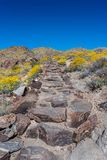 Stone Stair Case in Desert Bloom. Of Joshua Tree National Park Stock Photography
