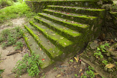 Stone Stair Moss In Green Forest