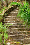 Stone stair outdoor Stock Photo