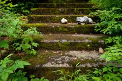 Stone stair overgrown with moss and green plants. In a forest Stock Photos