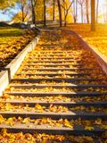 Stone stair path on a sunny autumn day. Stone stair path with colored leaves on sunny day Royalty Free Stock Photos