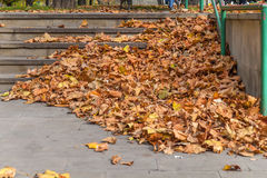 Stone stair path with a lot fall colored leaves. Close stock image