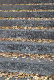 Stone stair. Steps in the yellow leaves in autumn Stock Photography