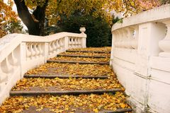 Stone staircase with colorful fallen leaves Stock Image