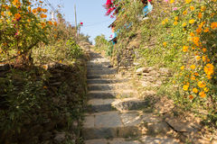 Stone staircase with colorful flowers and green plants Royalty Free Stock Photo
