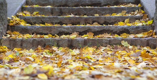 A stone staircase covered  leaves. A stone staircase covered autumn leaves Royalty Free Stock Photography