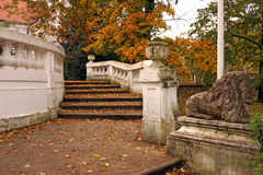 Stone staircase with fallen leaves in park autumn Stock Images