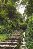 Stone staircase leading into Jungle. stock images