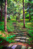 Stone staircase leading up a walkway Royalty Free Stock Images