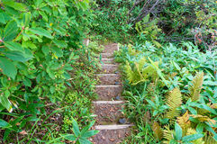 Stone staircase surrounded by green leaves and plants Stock Photos