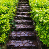 Stone stairs. With green bush on both sides Stock Photos