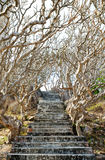 Stone stairs among crooked trees Royalty Free Stock Photography