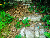 Stone stairs in the country side of Corfu. Island of Corfu Stock Photos