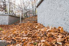 Stone Stairs covered with leaves in the autumn.  Royalty Free Stock Images