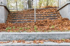 Stone Stairs covered with leaves in the autumn.  Stock Images