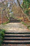 Stone stairs in the forest Stock Photos