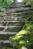 Stone stairs in the forest stock image