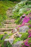 Stone stairs in garden Royalty Free Stock Image