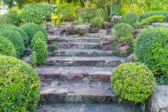 Stone stairs in the garden Stock Photography