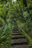 Stone stairs in a lush and verdant forest Royalty Free Stock Photography
