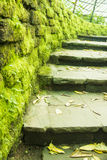 Stone stairs and mossy wall Stock Photos