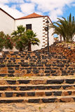 Stone stairs and palm trees. Royalty Free Stock Images