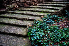 Stone stairs in park Royalty Free Stock Images
