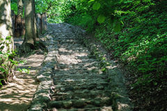 Stone stairs in the park among trees Royalty Free Stock Images