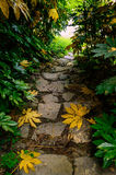 Stone stairs in rain forest Stock Photography