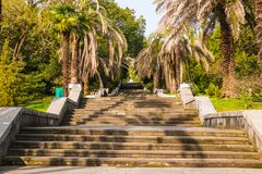 Stone stairs in Sochi Arboretum, Russia. Stone stairs and trees in Sochi Arboretum in sunny day, Russia Royalty Free Stock Photos
