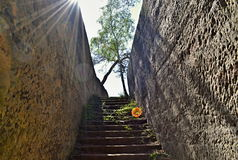 Stone stairs to tree Royalty Free Stock Image