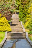 Stone stairs in Sochi Arboretum, Russia. Stone stairs and trees in Sochi Arboretum in sunny day, Russia Royalty Free Stock Photography