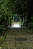 Stone stairs under trees and plants at night Royalty Free Stock Images