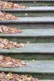 Stone stairs with wind-blown autumn leaves Stock Image