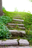 Stone stairway grass Stock Photography