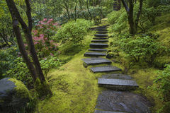 Stone stairway in a garden Stock Image