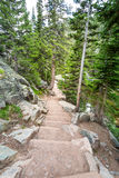Stone stairway in mountain forest. Stock Images