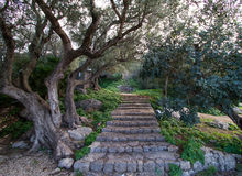 Stone stairway Royalty Free Stock Image
